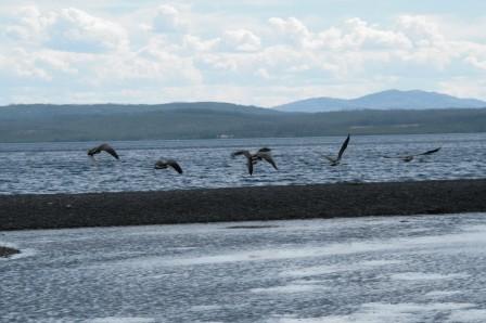 Yellowstone_lake_26-09-2015_11-20-008.JPG