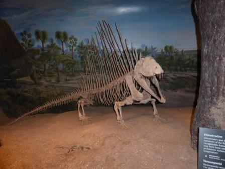 dinosaures_19-05-2015_03-48-38.JPG