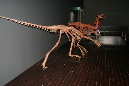 dinosaures__19-05-2015_03-20-00.JPG
