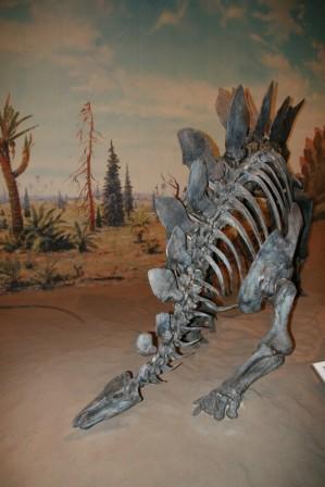 dinosaures__19-05-2015_03-54-03.JPG